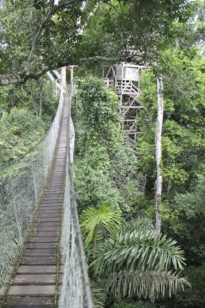 Inkaterra Reserva Amazonica: canopy walk