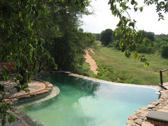 Garonga Safari Camp : A small but fantastic pool
