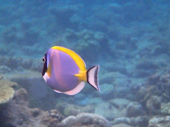 Kuramathi Island Resort: un poisson parmi d'autres à 50 cm de profondeur