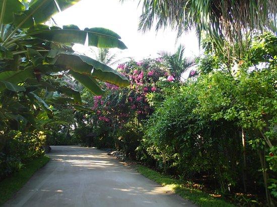 Kuramathi Island Resort: végetation sur l'île