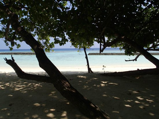 Kuramathi Island Resort: plage devant le bungalow