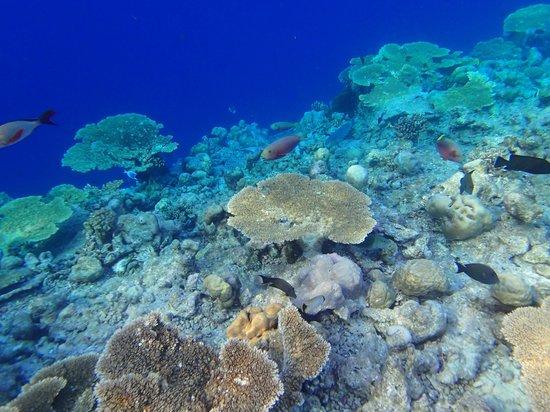 Kuramathi Island Resort: la barrière de corail en face du bungalow