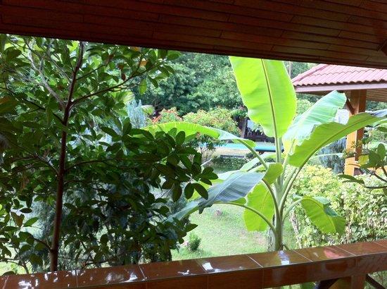 Green Villa: Вид из номера