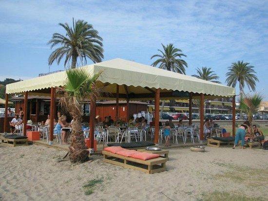 Castelldefels, إسبانيا: Iguana