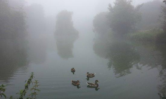 Jubilee Lake, Royal Wootton Bassett, ducks in the mist