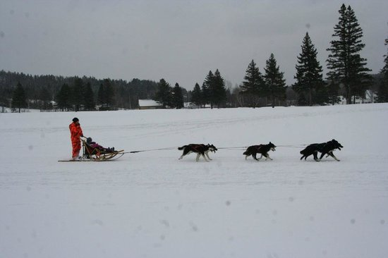 Colebrook Country Club & Motel: Dog sled rides offered during the annual Kiwanis winter carnival held here at the CCC!