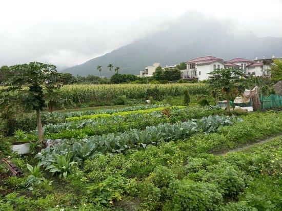Errantry Lodge & Studio: vegetable farm around Errantry