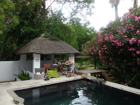 Mimosa Lodge: pool area