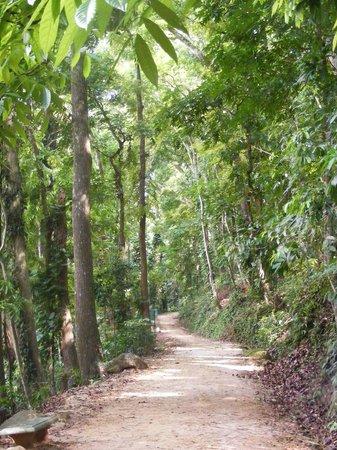 "Udawattekele Sanctuary: ""Lovers Walk"""
