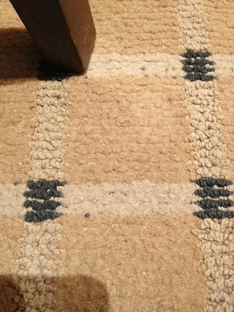Best Western Hotel Master: worn out and crusty carpet