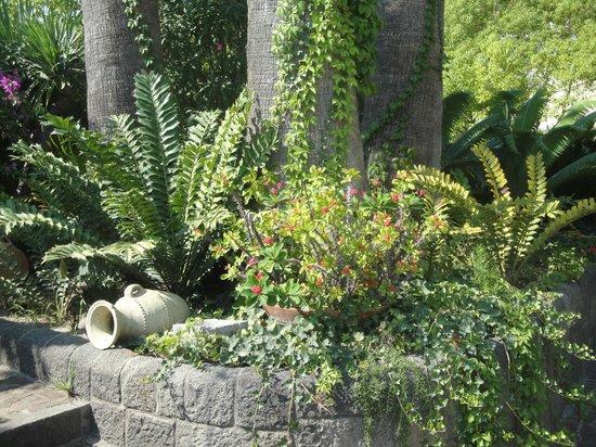 Hotel Parco Smeraldo Terme: Парк