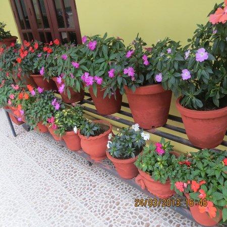 Las Palmas Munnar: Rooftop garden