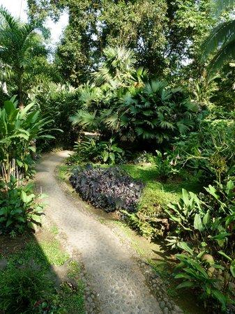 Heliconia Island Bed & Breakfast: Weg durch den Garten zum Bar Bereich