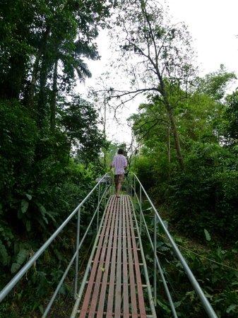 Heliconia Island Bed & Breakfast: Zugang über die Brücke