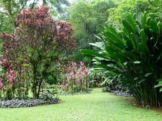 Heliconia Island Bed & Breakfast : Angelegter Garten