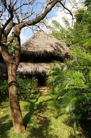 Kumbura Eco Lodge : The lodge