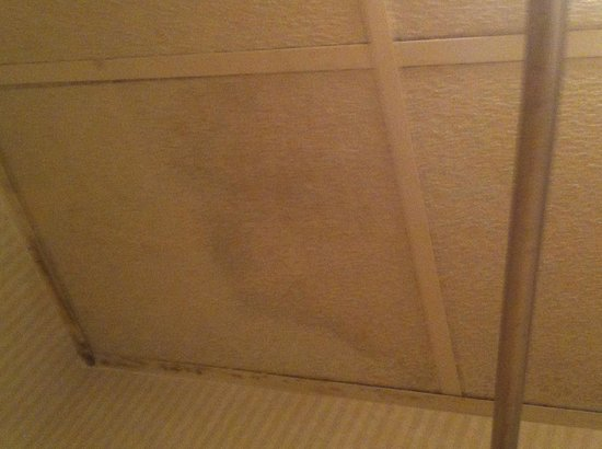 Motel 6 Columbus - Downtown: Ceiling tiles in bath