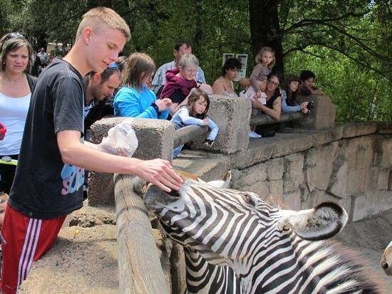 Zoo de la Palmyre : palmyre Zoo