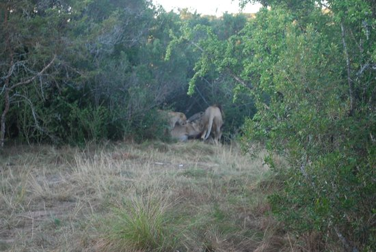 Sibuya Game Reserve & Tented Camp: Saw on Reserve