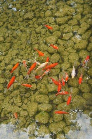Jeeva Klui Resort: the fish
