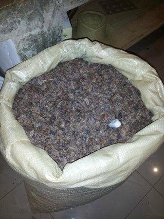 ChocoMuseo Punta Cana : cocoa beans!