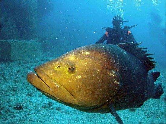 Blu Dive Center