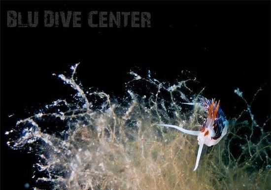Flabellina la maddalena arcipelago picture of blu dive center santa teresa gallura tripadvisor - Dive center blu ...