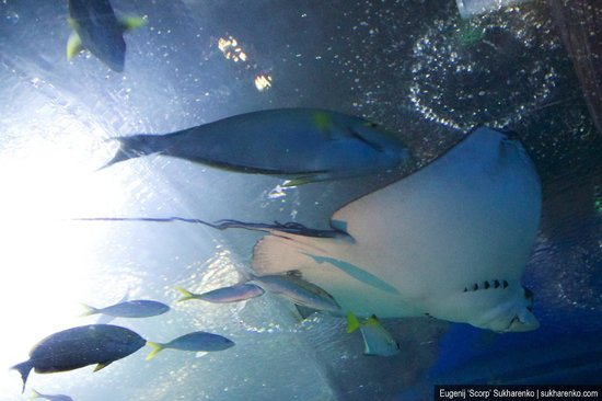 Kunststoffkrake - Picture of Underwater World Pattaya, Bang Lamung - TripAdvisor
