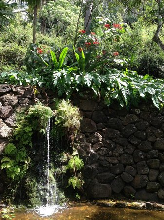 Waterfall with flowers - Picture of National Tropical Botanical ...