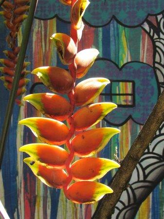 Casa Cool Beans B&B : Kleurrijk