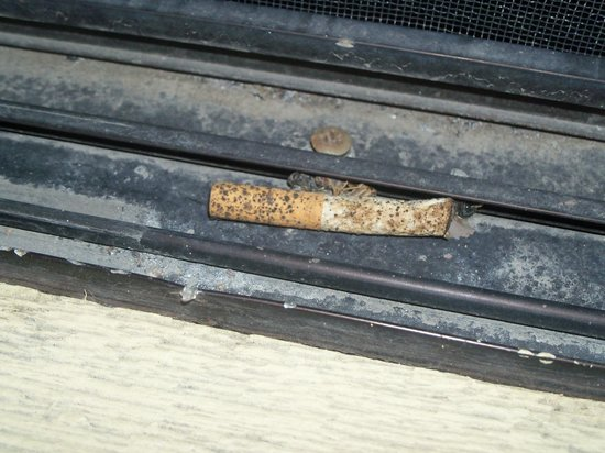 Quality Inn & Suites: The windowsills on the balcony were gross and had moldy cigarettes stuck in them