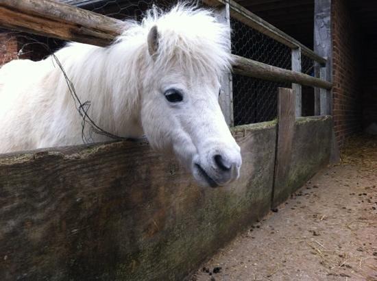 Honeybrook Farm: Gorgeous little pony