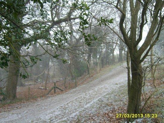 Sherwood Glen Guest House: lovely day for a walk lol