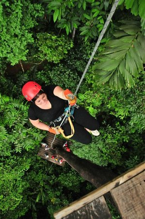 Canopy Safari: Rappelling