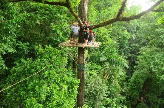 Canopy Safari: Yeah.. it's pretty high up there!