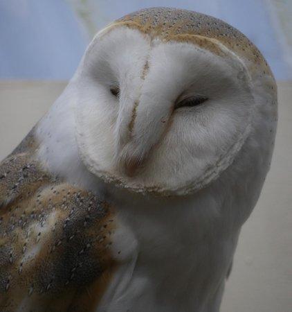 写真The International Centre for Birds of Prey枚
