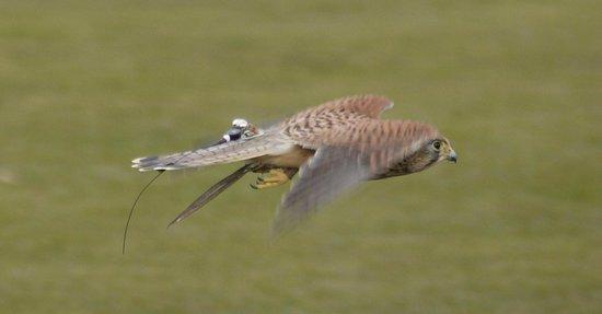 The International Centre for Birds of Prey: Bird of Prey Centre Newent
