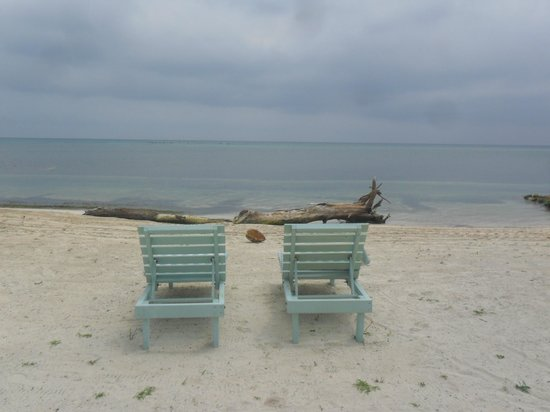 Blackbird Caye Resort: Care to join me?