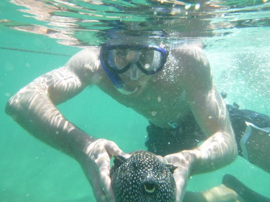 Huatulco Watersports Jet Ski and Boat Tours: The puffer fish!