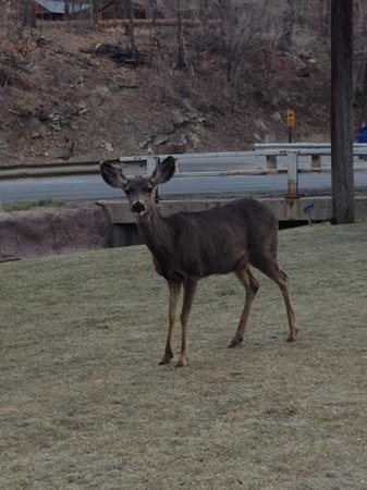 Ruidoso Lodge Cabins: a little guest as we were leaving for dinner