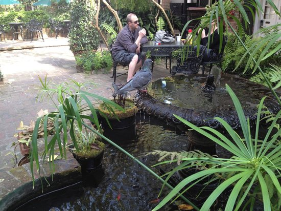 Place d'Armes Hotel : A pigeon enjoying the Koi Pond. You may enjoy your breakfast in the courtyard.