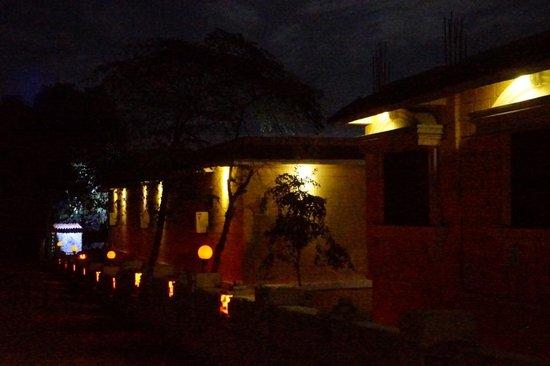 Gir Lion's Paw: At night