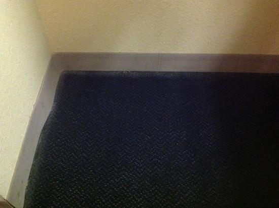Motel 6 Chandler : filthy carpets