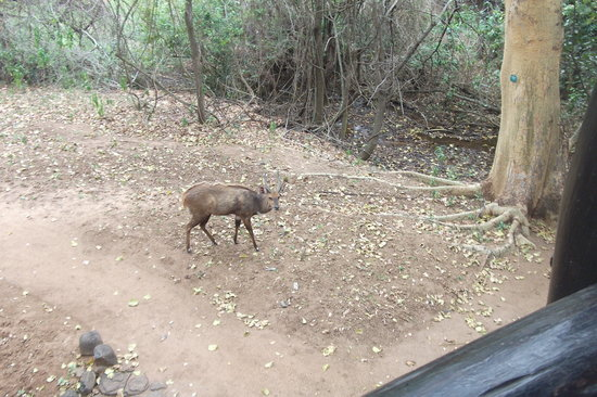 Protea Hotel by Marriott Kruger Gate: deer on the grounds