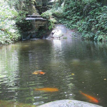 Lago com carpas picture of parque lage rio de janeiro for Carpa de rio