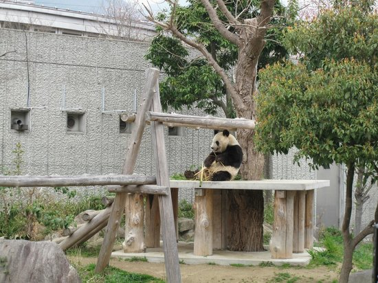 Kobe City Oji Zoo: panda