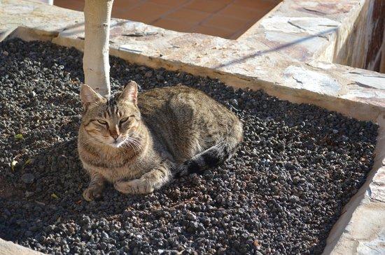 Hotel Arena : Hotel Cat