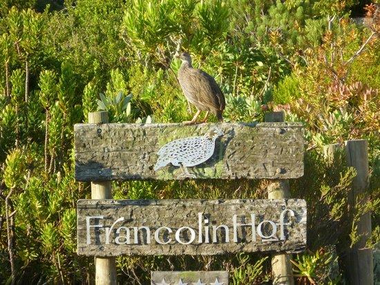 FrancolinHof : A Francolin bird