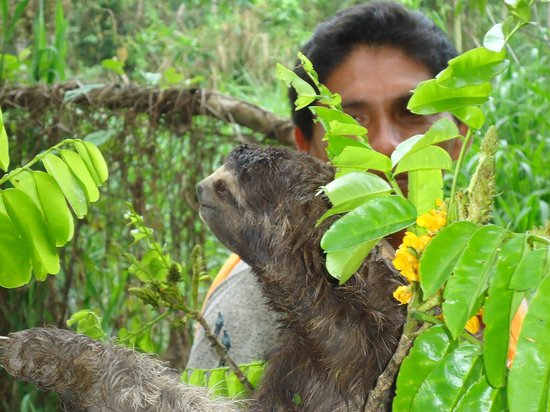 Pacaya Samiria Amazon Lodge: Oscar_and_the_sloth