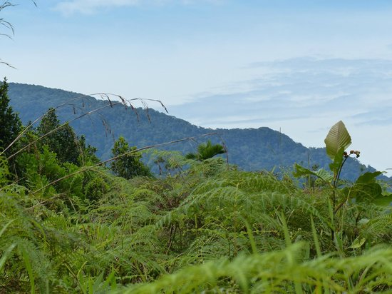 The Kebun: View